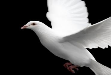 El Espíritu que guió a Jesús